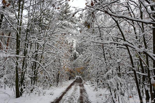 Droga do Leśnego Ogródka Botatnicznego KPN.