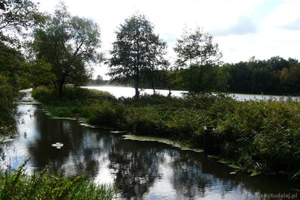 Rzeka Zielona, Lasy Chojnowskie.