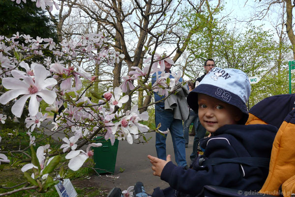 Dzień Magnolii, ogród botaniczny PAN w Powsinie.