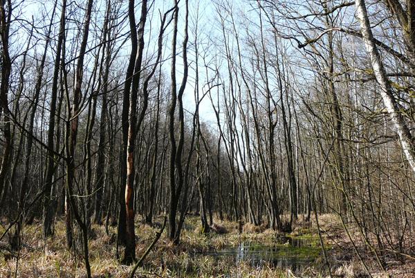 Mokradła w okolicy wsi Sadówka.