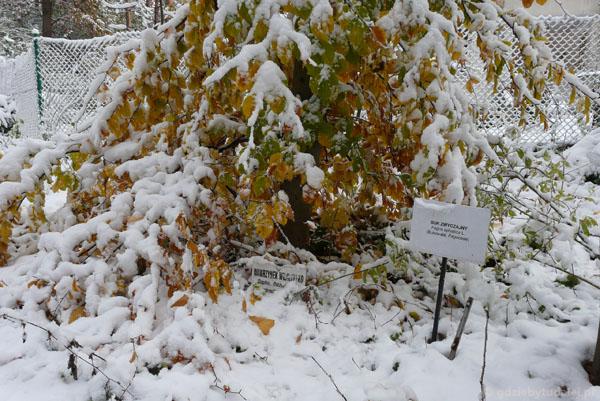 Niektóre tabliczki wystają spod śniegu.