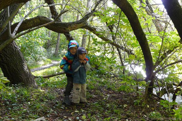 Ale fajne drzewo - można się pod nim schować!.