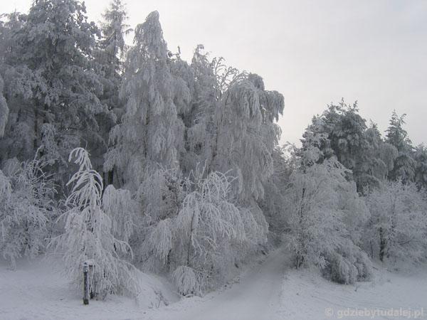 Przez Czarnorzeki na Suchą Górę.