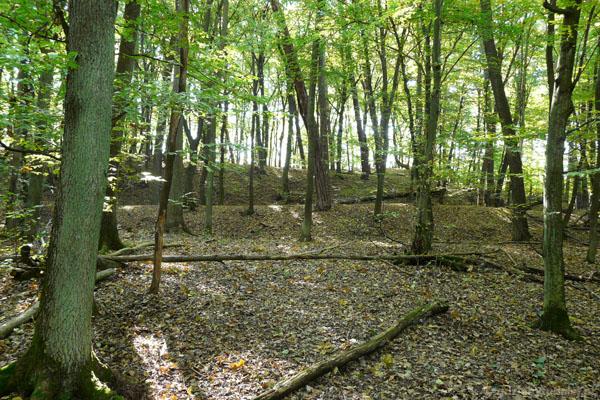 Wczesnośredniowieczne grodzisko - pozostałości fos.