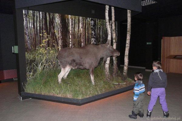 Chłopcy głowią się, co to za dziwne zwierzę.