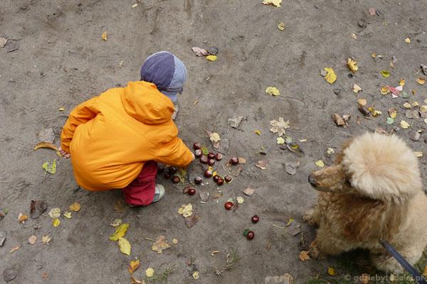 Rega, nie zjadaj kasztanów!.