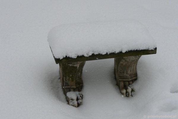 Czasem spod śniegu coś się wyłoni.