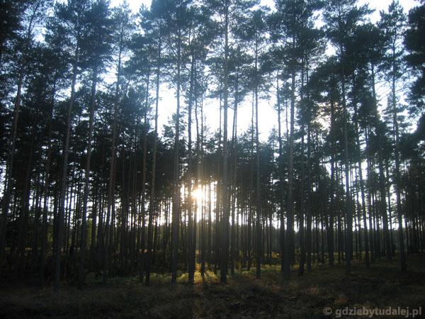 Lasy za Wdą