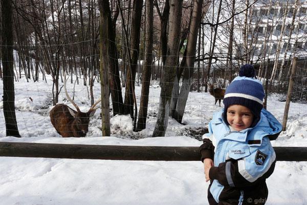 Leśny Park Niespodzianek, Ustroń.