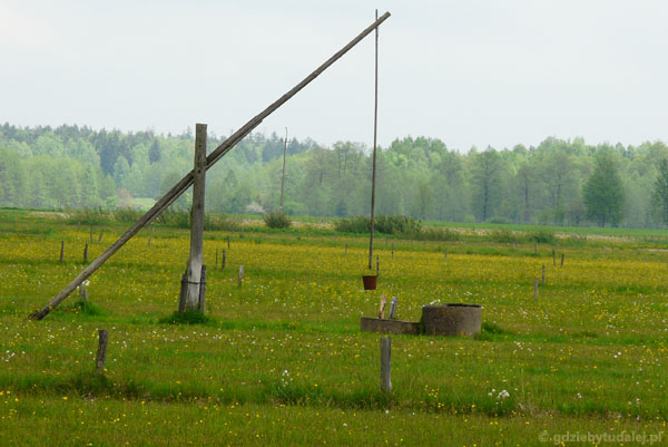Białowieskie pola...