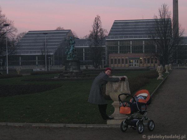 Palmiarnia w Parku Wilsona
