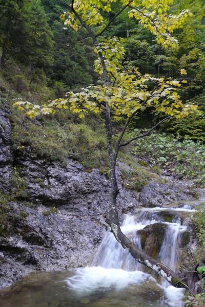 Dolina za Bramką.