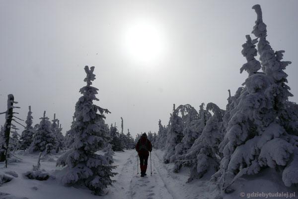 Czarna Góra - Śnieżnik.