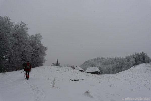 Z Łomnicy na Halę Łabowską.