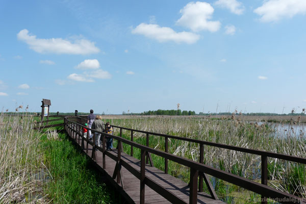 Ścieżka przyrodnicza po rozlewiskach Narwi, Kurowo.