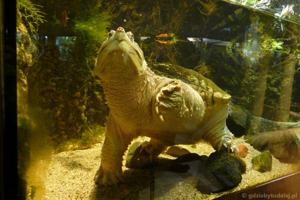 Żółw pozował jak prawdziwy model.