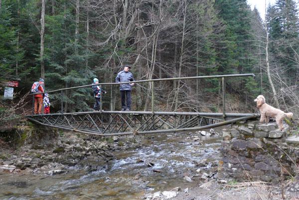 Rega boi się przejść przez mostek.