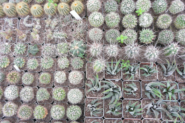 Rozmaitość roślin przyprawia o zawrót głowy.