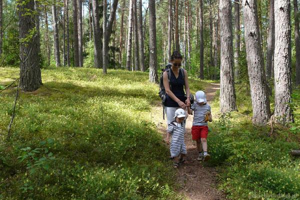 Ścieżka botaniczna w Pałuszach.