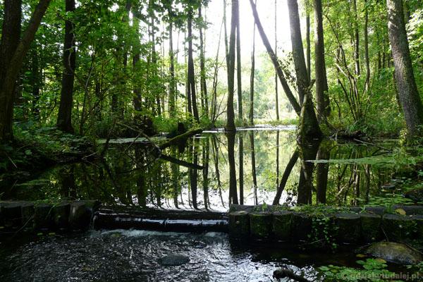 Ścieżka przyrodnicza Dolina Rzeki Gąsawki.
