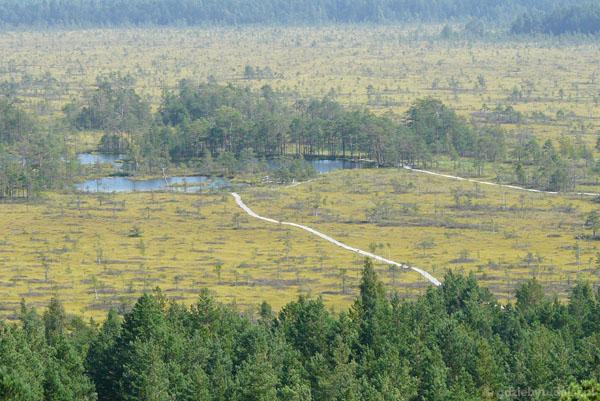 Widok na bagna i kładki ścieżki przyrodniczej.