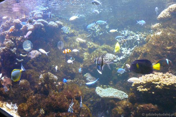 Oglądamy rafę koralową - bez nurkowania!.