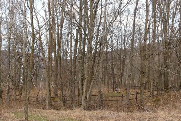 W drzewach kryje się cmentarz.