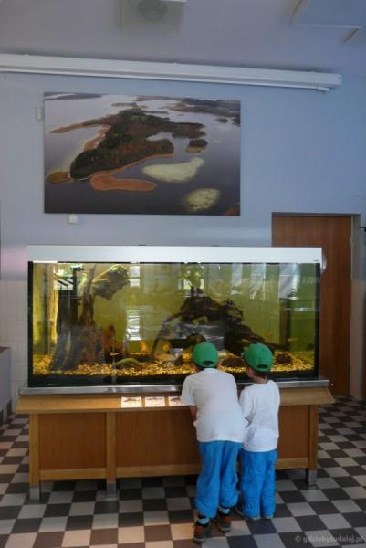 Chłopcom najbardziej podobały się wigierskie rybki.
