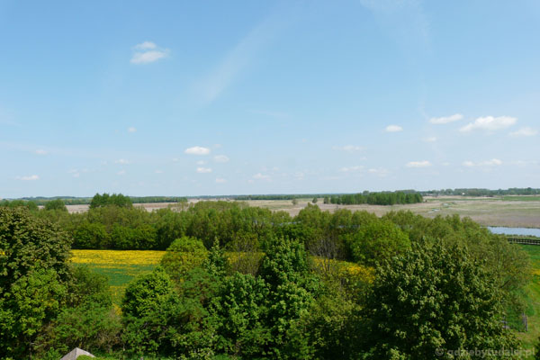 Widok z wieży na dolinę Narwi w okolicach Kurowa.