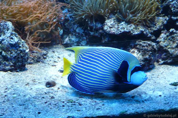 To jedna z naszych ulubionych rybek.