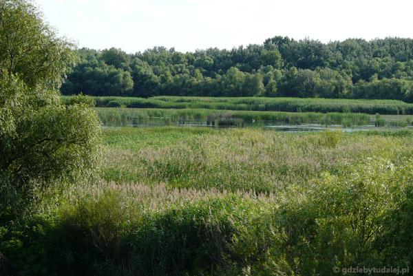 Malownicze Jezioro Cisa.