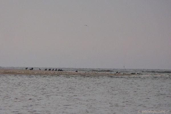 Mieszkańcy rezerwatu Mewia Łacha.