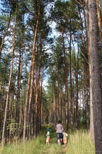 Spacer po lasach w Rozalinowie.