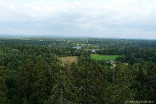 Wokół wielka zieleń - widok z wieży na Suur Munamägi.