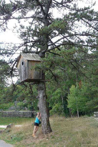 A dla kogo ta budka na drzewie...