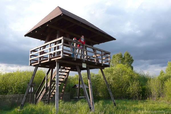 Wieża widokowa na Bagno Bubnów.
