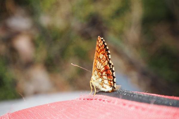 Motylkowy postój.