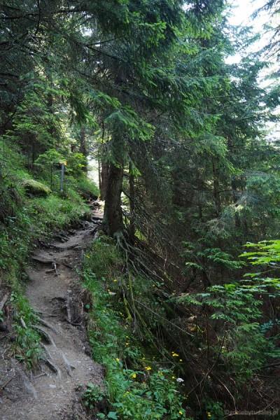 Najpierw nasza ścieżka wije się przez las.