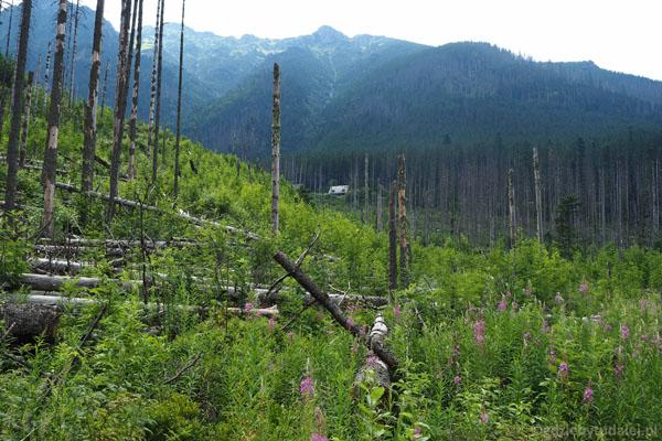 Wracamy do szosy przez zniszczony las.