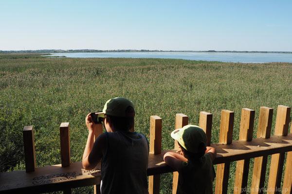 Chłopcy patrzą na Jezioro Łuknajno.
