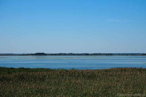Jezioro Łuknajno - jedna z największych ostoi łabędzia niemego.