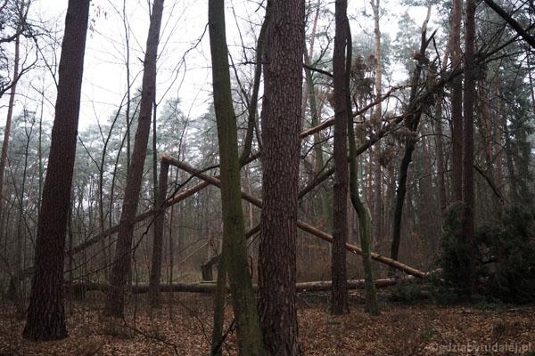 Po chwili znajdujemy się w lesie.