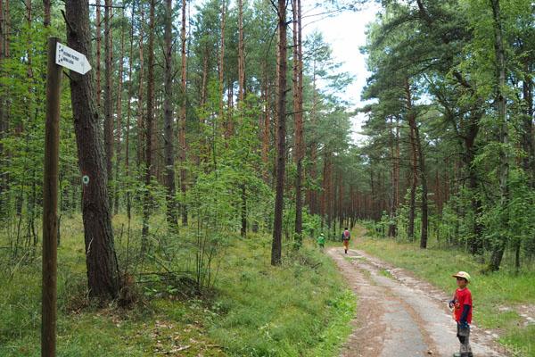 Potem skręcamy w las