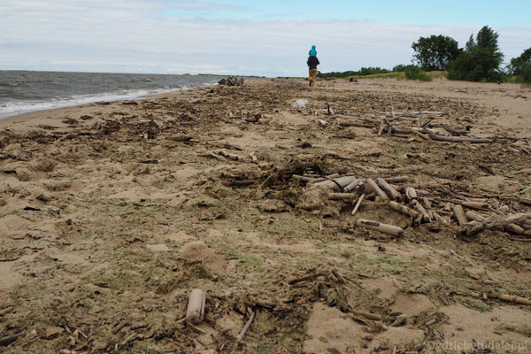 Plaża w okolicy Ujścia Wisły