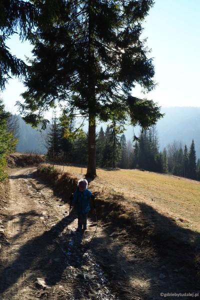 Zielonym szlakiem z Obidowej na Stare Wierchy