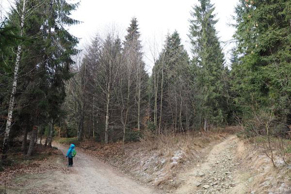 W prawo odgałęzia się szlak na Śnieżnicę