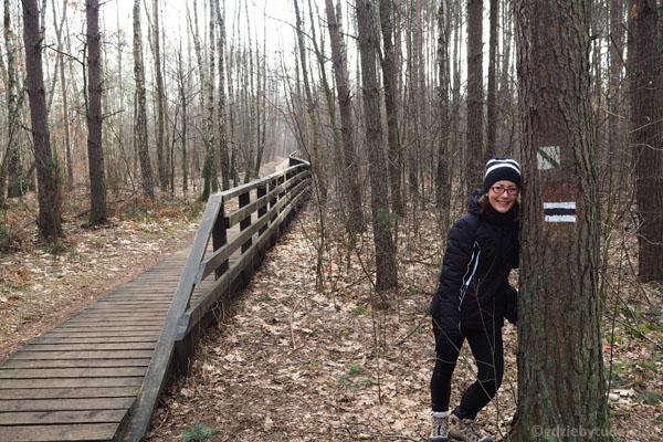 Szlak na drzewie, szlak na czapce.