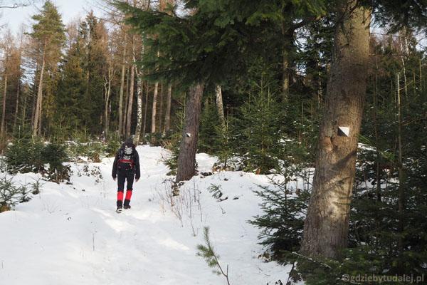A potem wprowadzają na leśną ścieżkę.