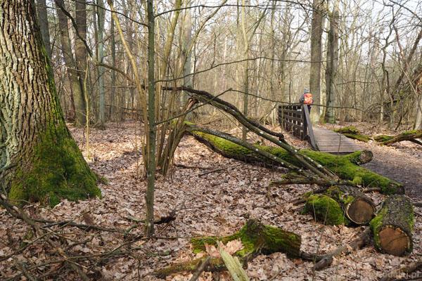 Co krok las wygląda inaczej.