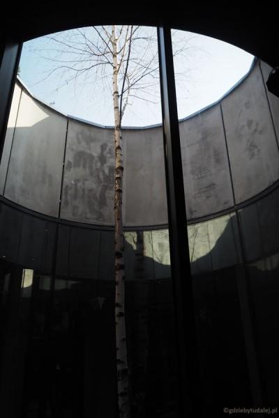 Jedna z brzóz upamiętniających miejsca egzekucji.